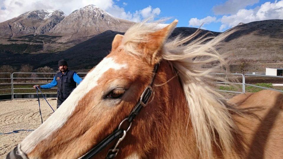 Addestramento cavallo: sgambatura
