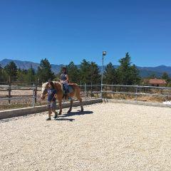 Equitazione di base